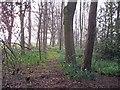 SJ8167 : Footpath through wood north of Clonterbrook Farm by Richard Dorrell