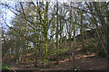 SJ5056 : Cawley's Wood on Burwardsley Hill by Espresso Addict