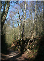 SJ5257 : Sunken track through Peckforton Woods by Espresso Addict