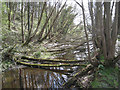 SK3189 : Fallen saplings, head of mill pond, Wisewood by Robin Stott