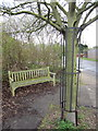 TL1840 : Bench and tortured tree by Philip Jeffrey