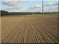 SP4576 : Winter wheat emerging by Robin Stott