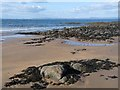 NT4883 : Coastal rocks, Gullane Bay by Oliver Dixon
