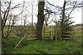 SJ8260 : Footpath to Brook Lane, Noahs Ark Farm by Peter Turner