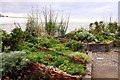 NZ3575 : The garden on St Mary's Island by Steve Daniels