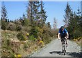 NR8787 : Cyclist in the forest : Week 18