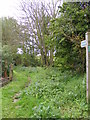TM2750 : Bridleway to the A1152 Woods Lane by Adrian Cable