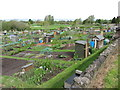 ST6389 : Dagg's allotments, Thornbury : Week 19