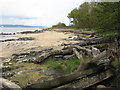 NT1579 : Driftwood and beach at Dalmeny by M J Richardson