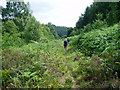 SE6891 : Path through bracken by Peter Holmes
