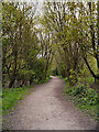SD7403 : Path in Blackleach Country Park by David Dixon