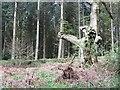 SO4466 : Croft Wood : Week 19
