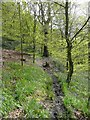SE0421 : Sowerby Bridge Footpath 135 in Rough Hey Wood, Norland by Humphrey Bolton