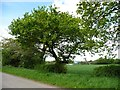 SJ7377 : Roadside trees, Sudlow Lane by Christine Johnstone