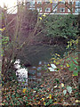 SP3165 : Surface water outfall to River Leam by Robin Stott