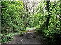 TQ3553 : Quarry Road near Winders Hill Wood by David Anstiss