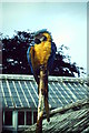 NJ9304 : Parrot on a Stick by Colin Smith