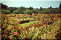 NJ8905 : Rose Garden by Colin Smith
