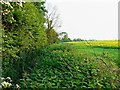SU2693 : View south from a footpath west of Great Coxwell, Oxfordshire by Brian Robert Marshall