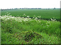 TL5763 : Cultivated fields north of Cadenham Road by Evelyn Simak