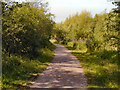 SD6800 : Path Through Colliers Wood by David Dixon