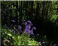 SX0046 : Gardens of Heligan by Chris Gunns