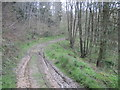 SE5381 : Muddy  Track  Cocker  Dale by Martin Dawes