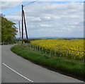 SO7671 : Oil seed rape and Heightington Road by Mat Fascione