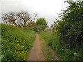 SD6701 : Langley Platt Lane by David Dixon
