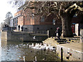SP2054 : Feeding the swans near the Royal Shakespeare Theatre by Robin Stott