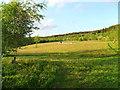 SJ0248 : Coed Keri at Hafotty Newydd by Martin Evans