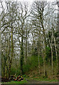 SO0057 : Woodland clearing south-west of Newbridge-on-Severn, Powys by Roger  Kidd