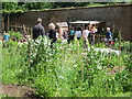 TQ8009 : Summerfield Woods, Walled Garden by Oast House Archive