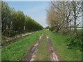SJ3666 : Track between the trees by John Haynes