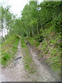 NH2928 : Track in Glen Affric Forest by Dave Fergusson