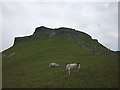 SD8372 : Sheep below the crags of Pen-y-Ghent by Karl and Ali