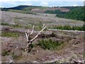 SK2191 : This used to be Brogging Moss Plantation by Graham Hogg