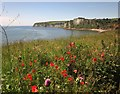 SY2489 : Clifftop flowers, Seaton by Derek Harper
