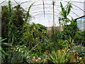 TQ5264 : The Cloud Garden, World Garden, Lullingstone Castle by PAUL FARMER