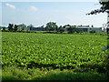TF2005 : Farm south of Newborough by Richard Humphrey
