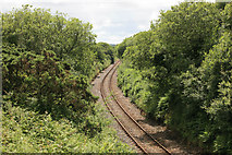 SX0160 : The Newquay branch from nr Criggan by roger geach