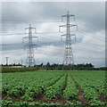 TA0019 : Potatoes and Pylons by David Wright