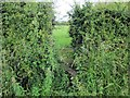 SJ4863 : Overgrown Stile on Cow Lane by Jeff Buck