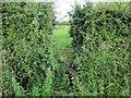 SJ4863 : Overgrown Stile on Cow Lane by Jeff Buck