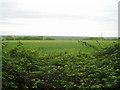TL4051 : Farmland on Chapel Hill by Logomachy