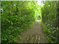 TL3951 : Muddy footpath on Chapel Hill by Logomachy