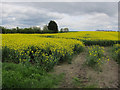 TL6372 : Oil seed rape field by Hugh Venables