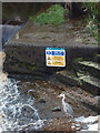 SD5868 : A heron completely ignoring Health and Safety issues at Hornby Weir by Karl and Ali