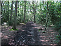 TQ6092 : Path in Hart's Wood by Roger Jones