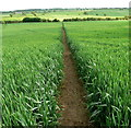 SK6916 : Heading south along the Leicestershire Round Footpath by Mat Fascione